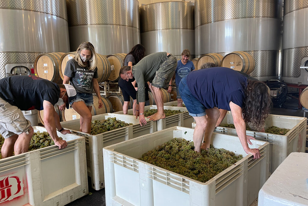 Crew stomping grapes with feet.